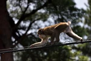 2015/8/18 D750 猿が~~~