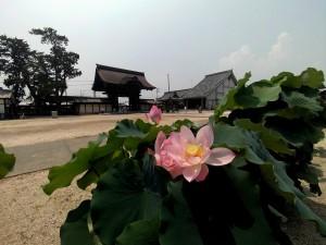 2015/8/3  DSC880DW D750 高田本山界隈