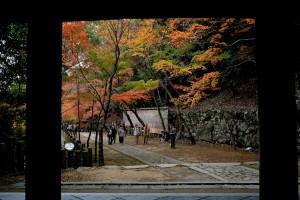 2015/11/16  Df  永源寺にて