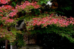 2015/11/17  GX8  九華公園にて