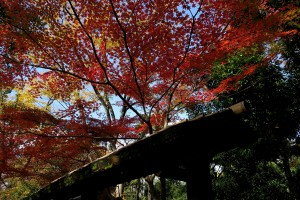 2015/12/3  G9X  鶴舞公園の紅葉