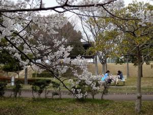 2016/3/27 WX7 淡墨桜
