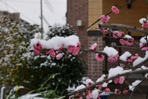 2016/3/1 GM5 12-32 雪の朝