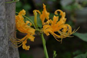 2016/10/23 Df タムロン90 庭の花
