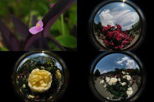 2020/5/27 T4 16-80 Lensbaby Fisheye 5.8