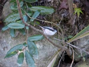2013/11/18 FZ200 小鳥の季節