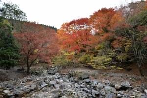 2013/11/27 D600 宮妻峡の紅葉