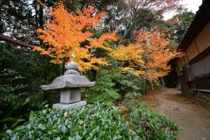 2013/11/27 D600 桃林寺の紅葉