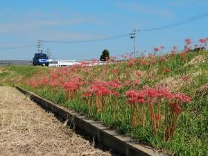 2012-10-8 P510 近所に咲く花