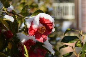 2014/3/11 D7100 雪の朝