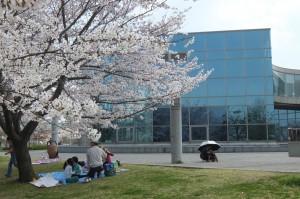 2014/4/3 XF1 桜(あいち健康の森公園)