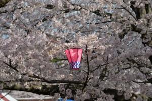 2014/4/5 Df 70-200 f/4G 鈴鹿さくら祭り(旭化成ケミカルズ鈴鹿工場)
