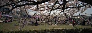 2014/4/5  TX-1 30mm 鈴鹿さくら祭り(旭化成ケミカルズ鈴鹿工場)