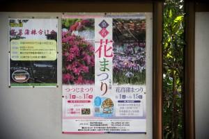 2014/6/6 M5 PZ 14-42 九華公園 花菖蒲