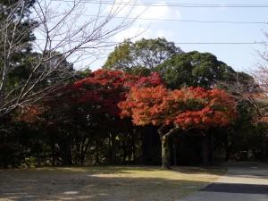 2012/11/7 HX30V 津偕楽公園にて