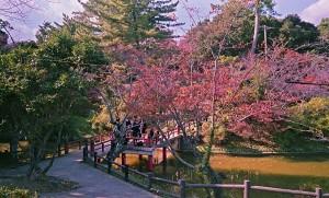2012/11/7 津偕楽公園にて