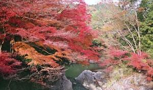 2012/11/22 河内渓谷にて