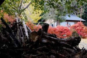 2012/11/30 E1 長瀬神社にて