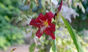 2012/8/31 8月最後の庭の花