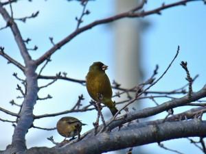 2013/2/10 FZ200 今日の小鳥