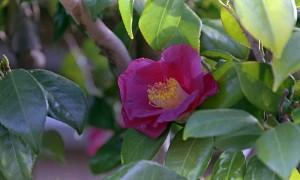 2013/3/10 3月 庭の花(蕾)