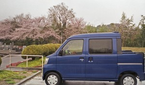 2013/3/31 桜・雨の日