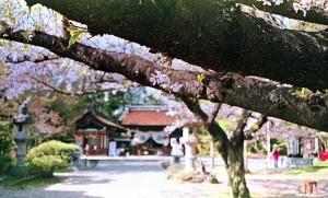 2013/4/6 治水神社にて
