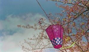 2013/4/7 桜は終わったけれど・・・