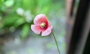 2013/4/27 庭の花たち