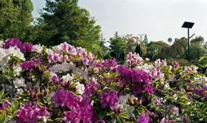 2013/5/5 神戸公園にて