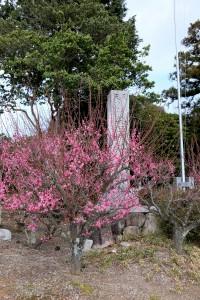 2015/3/4  T1 18-135 ちょっと早い梅