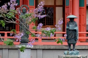 2015/4/29   T1 18-135 津観音 桐の花