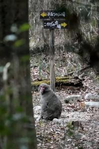2015/3/3  D750 300/4e (1.4)  猿 ルリビタキ他