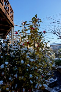 2015/2/9  RX100Ⅲ 雪の朝