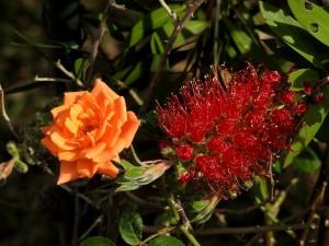 2015/5/17  P900 庭の花とか・・・