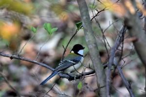 2014/11/13  V3 70-300 小鳥たち